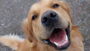 Fogas kérdés: mindennapi szájápolás kutyáknak