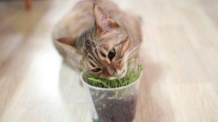 Hajmeresztő cica-gondok: szőrgombócok, és amit tehetünk ellenük