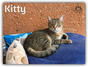 Kitty gazdit keres!