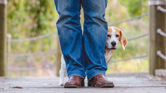 Mit tegyünk, ha fél barátkozni a kutyusunk?