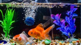 Kemény kérdések: mennyire legyen kemény a víz az akváriumban?