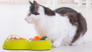 Kombinálunk! Vegyes táplálás cicáknak