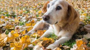 5+1 őszi tipp az idősebb kutyák etetéséhez