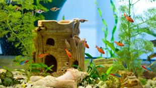 Látványos dekorációk az akváriumba