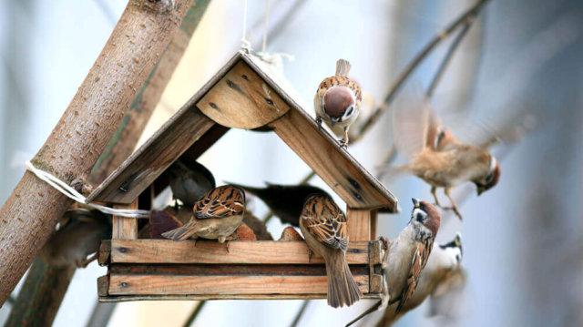 5 tipp a téli madáretetéshez