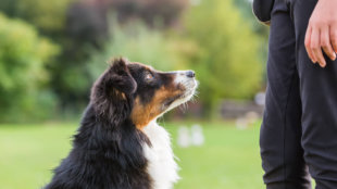 Mit tegyünk, hogy kutyusunk jobban figyeljen ránk?