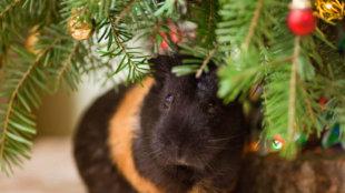 Kisemlősök karácsonya: mivel lepjük meg apró bundás barátainkat?