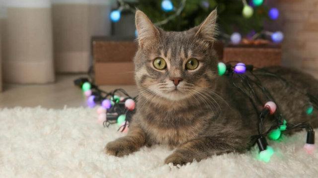 Megfelelő és biztonságos karácsonyi dekor cicás gazdiknak