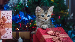 Kis barátot karácsonyra? Ezek alapján válasszunk: