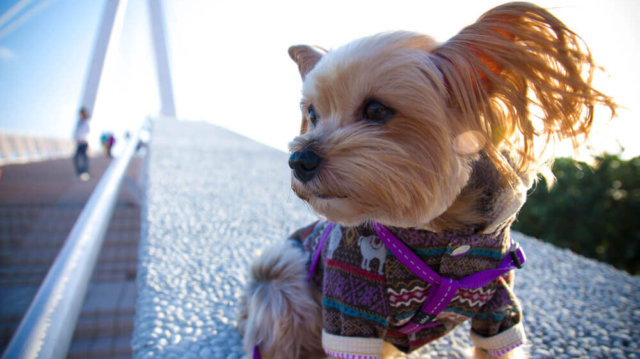 Együtt az ünnepek alatt – téli utazás kutyussal: