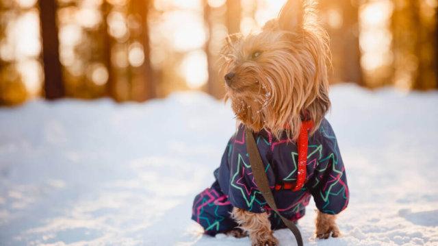 Téli sétáltatási tippek kistestű kutyáknak