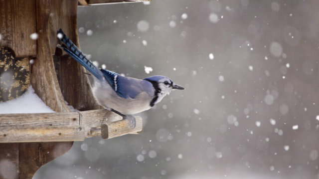 A legfontosabb finomságok madáretetőkbe