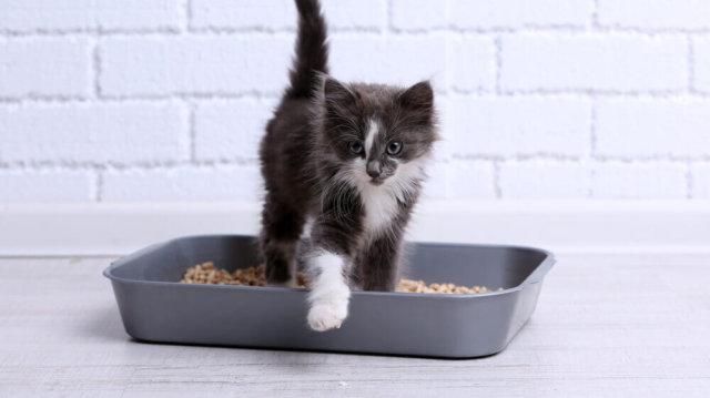 A higiénikus macskaalom titka