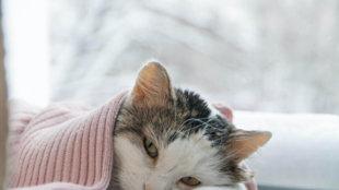 Öt gyakori macskabetegség