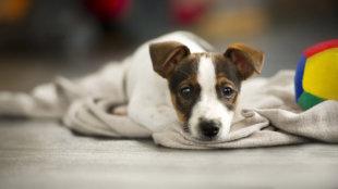 Amikor a kutyus nem tud nélkülünk élni