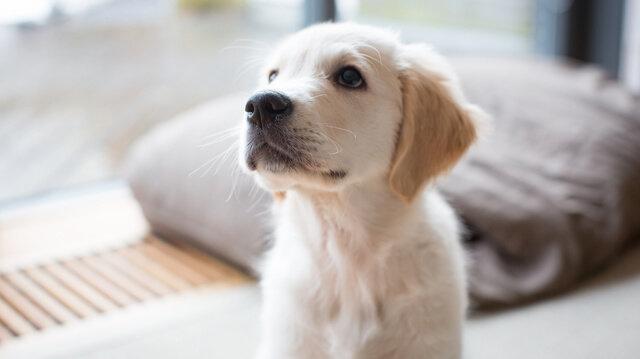 Mit tegyünk, ha még mindig bepisil a kutyusunk?