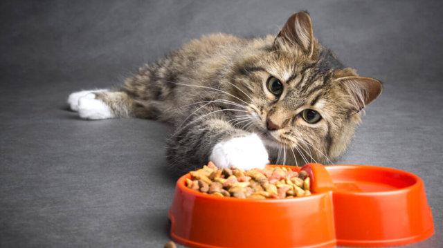 Gabonamentes táplálkozási tippek cicáknak
