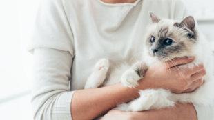Speciális igényű cicák gondozása
