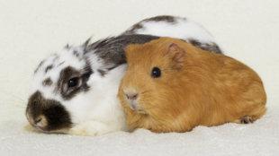 Kisemlősök megfelelő ápolása