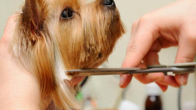 A kutyaszőr ápolásának 5 legfontosabb pontja