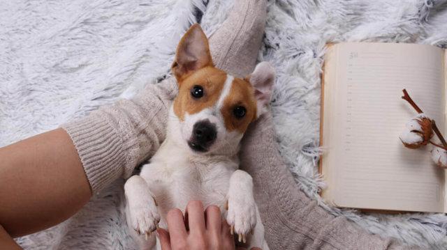 Aki az állatokat szereti, rossz ember nem lehet! – Kedvenceink lelkünkre gyakorolt jótékony hatásairól