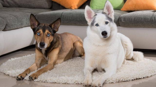 A beilleszkedés törvényei – új kutya a háznál