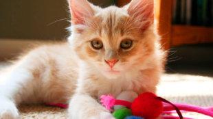 A legjobb macskajátékok kint és bent