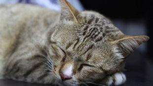 Idős cicák leggyakoribb egészségügyi gondjai