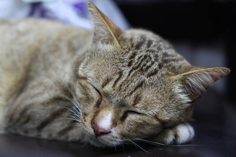 fogyás a macskábana