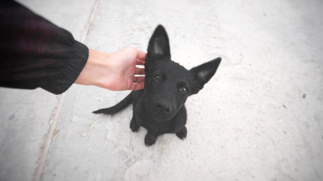 Kis kalandor, mit tegyünk, ha elveszett kutyust találunk