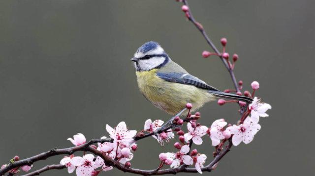 Tavaszi madáretetés