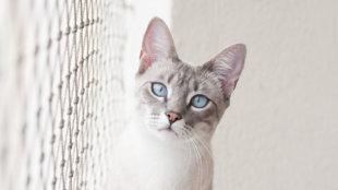 Biztonsági háló cicáknak