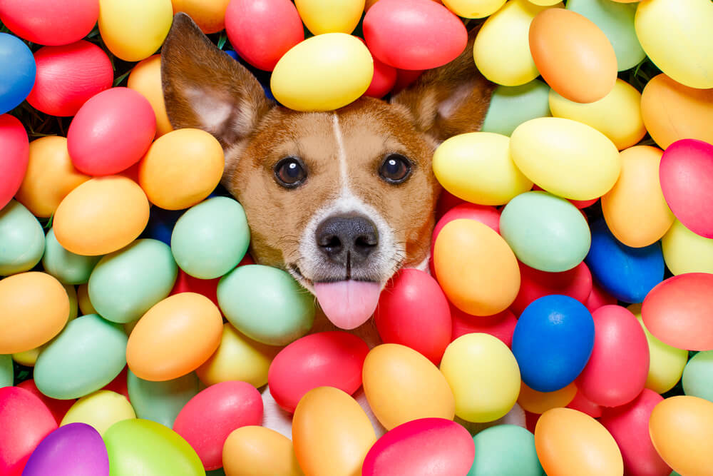 Húsvéti csoki őrület – vigyázzunk kutyusunkra!