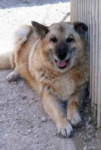Bogáncs ,12 évesen gazdit keres // Bogancs, 12yrs looking for home