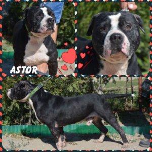 Astor keresi álomotthonát!