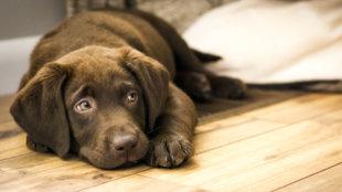 Miért fontos minden kutyának a megfelelő mentális és fizikai igénybevétel?