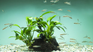 Akváriumtelepítés lépésről lépésre