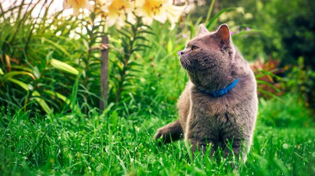 Megfelelő védelem cicák számára