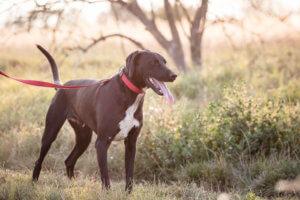 gazdikereső kutyus, Maxi