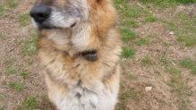 gazdikereső kutyus