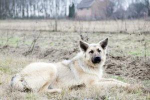 gazdikereső kutyus, Lulu