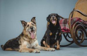 gazdikereső kutyus, Maci és Leila