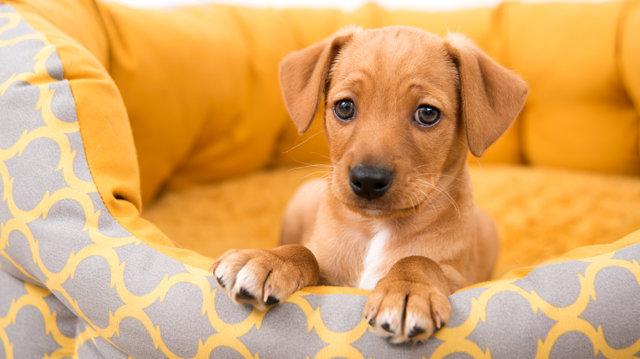 Hogyan tanítsuk meg kutyusunkat a fekhelyén maradni?