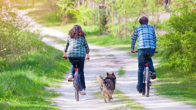 Mit tegyünk, ha kedvencünk hajtja a kerékpárosokat?
