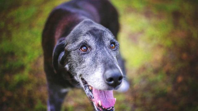 Korai kutyaőszülés – bajt jelez?