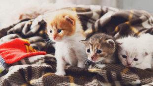 Pótmamaság: árva cicákat találtam