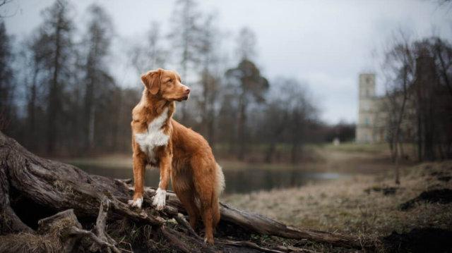 Hatodik érzék – érdemes figyelni kutyánk viselkedését
