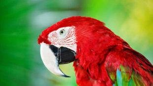 Beszélő papagájok – hogyan tanítsuk őket?