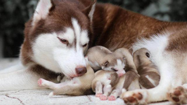 Bővült a család! Hogyan segítsünk az újdonsült anyukának?