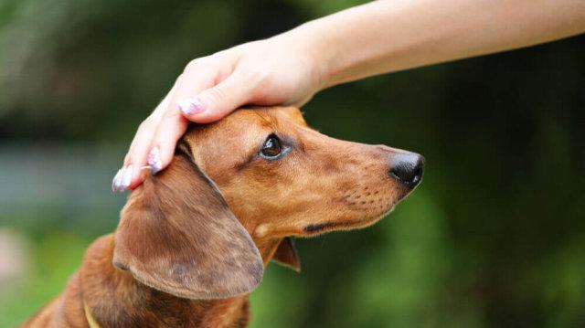 Hogyan fegyelmezzük kutyusunkat?